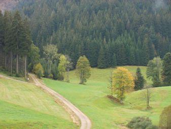Bild eines Waldes mit Wiese und Weg